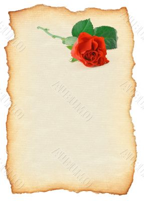 scroll with rose