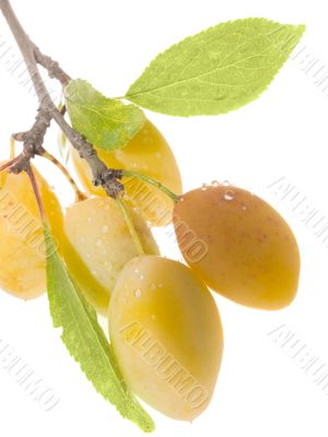 Fruits ripe yellow sweet plums