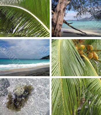 Tropical installation. Seychelles