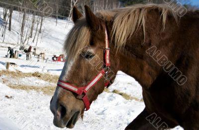 Vermont Sleigh Horse