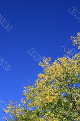 Crone of a autumn tree on the right