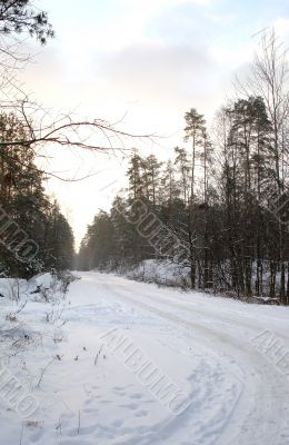 Road in the forest, the dawn