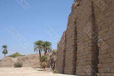 Egypt Series (Palm Tree Horizontal)