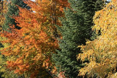 Foliage diversity