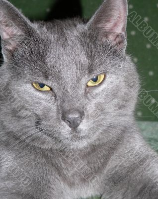 Cat Expressions