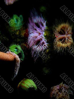 Neon Sea Anemones