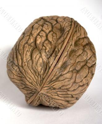 a walnut souvenir