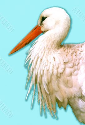 White stork Ciconia ciconia on a blue background