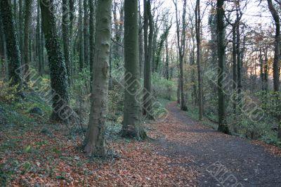 Nature Walk in Autumn