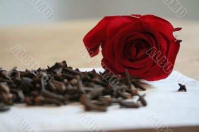 carnation and rose petal
