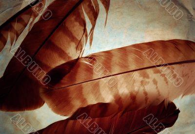 Grunge feathers
