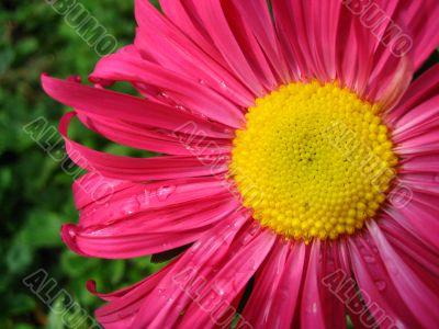 Year flower