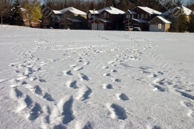 Footprints lead home