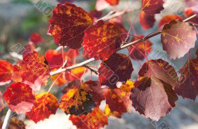 Autumn twig