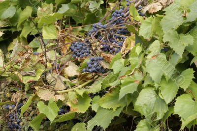 Autumn crop.