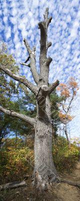 Naked dead tree 5