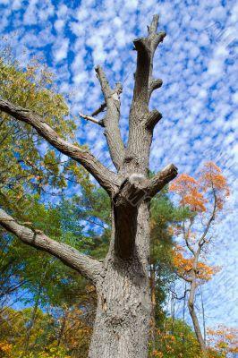 Naked dead tree 2