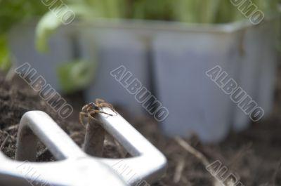 garden spider 070325Img0081