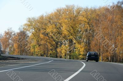 Autumn highway with yellow tress on both sides