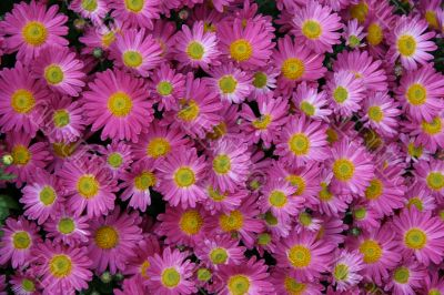 detailed background of vivid fresh flowers