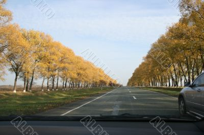 Autumn highway with yellow tress