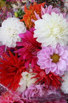 vivid varisorted multicolored flowers background