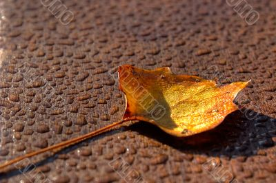 The fallen yellow leaf on a wooden surface covered by drops