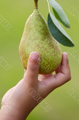 hand catching a pear