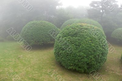 bushes in park