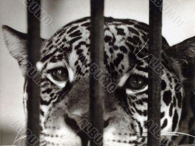 a portrait of leopard
