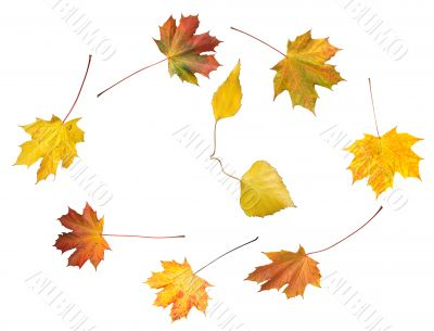 Autumnal time dance