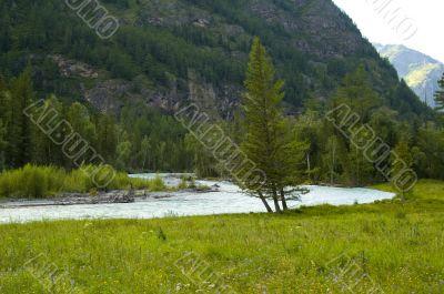 River through Altay mountain