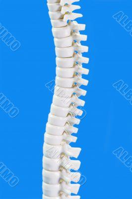 Backbone in Detail