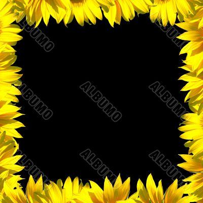 Petals frame on black