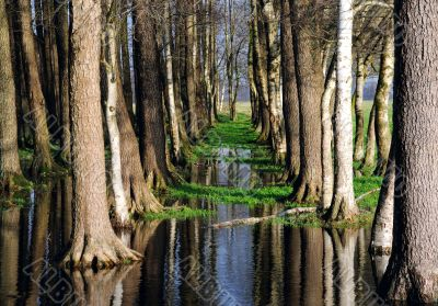 Trees and sky mirroring