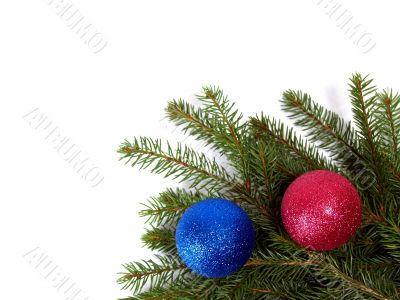 branch spruce with red ball