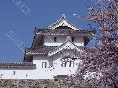 japanese castle in spring-time