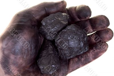 Pieces of coal in dirty palm