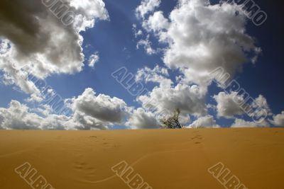 In dune