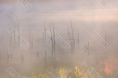 Reeds and Autumn Reflections