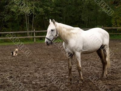 White horse and dog