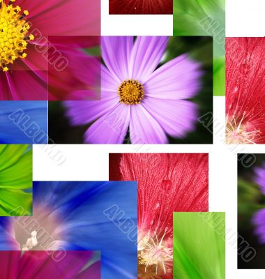 A lot pf pictures - flowers.