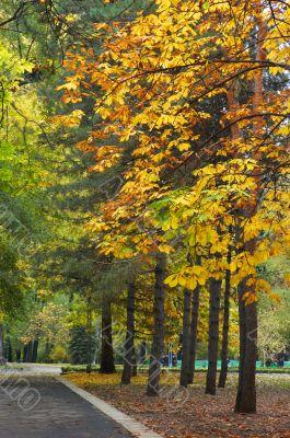 autumn avenue in park