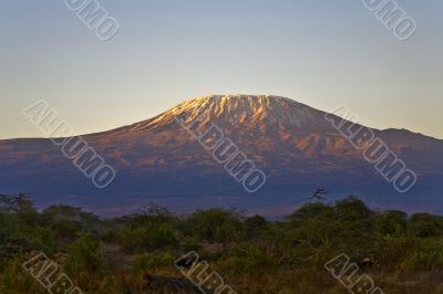 Kilimanjaro Morning