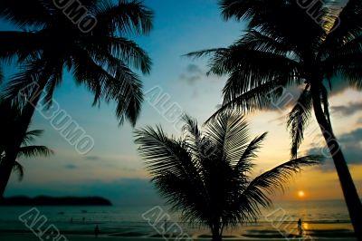 sunset in tropics