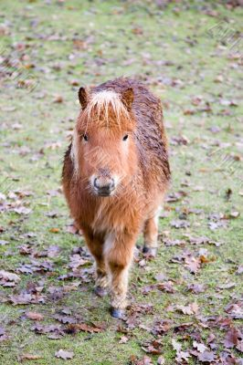 Cold and wet pony