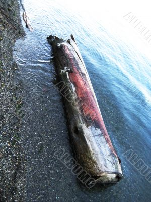 Salmon Colored Driftwood