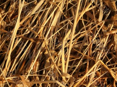 Hay - the dry oblique grass.