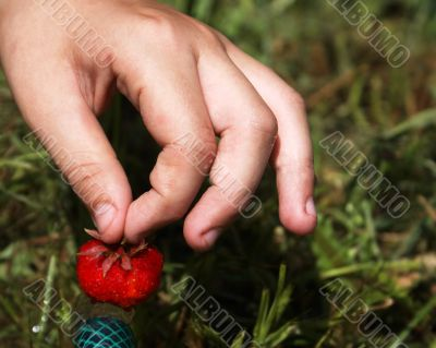 The first berry.
