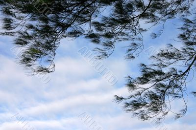 Tree branches against blue sky, in summer season